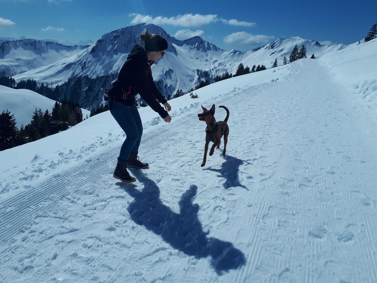 Pfotenpflege Hund mit CBD Öl