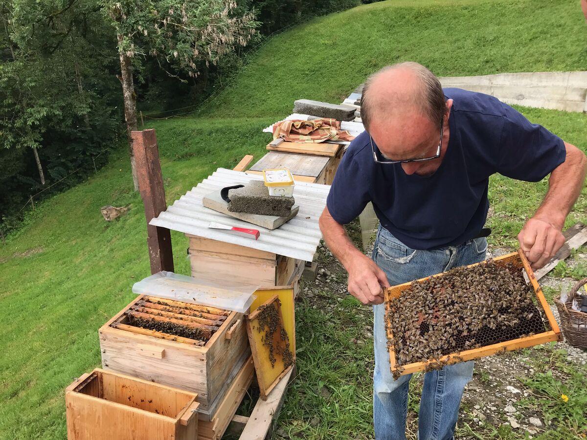 Hanf Honig Imker bei der Arbeit